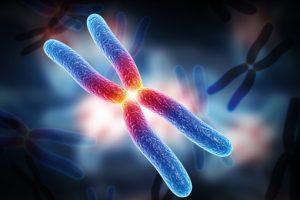 galli-cytogenetics-citogenetica-dna